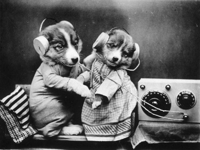 Radio dogs have their day