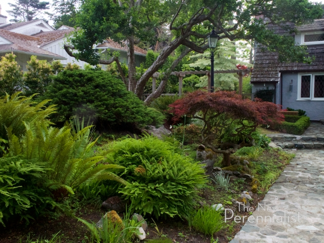 Japanese-influenced front garden in Victoria