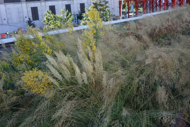 Perennials and grasses interwoven at the High Line