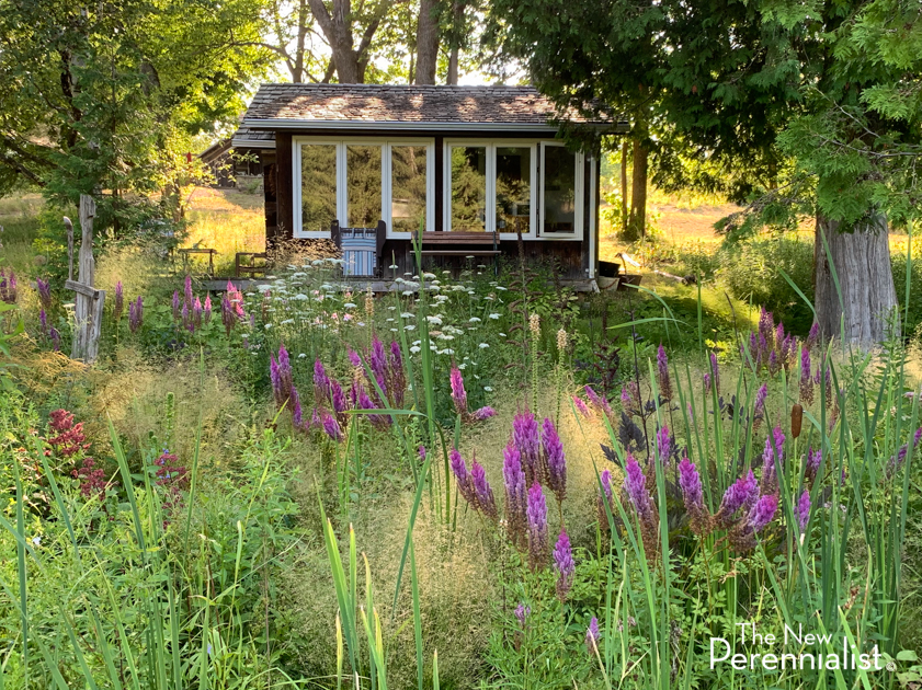 New Perennial Pond Garden
